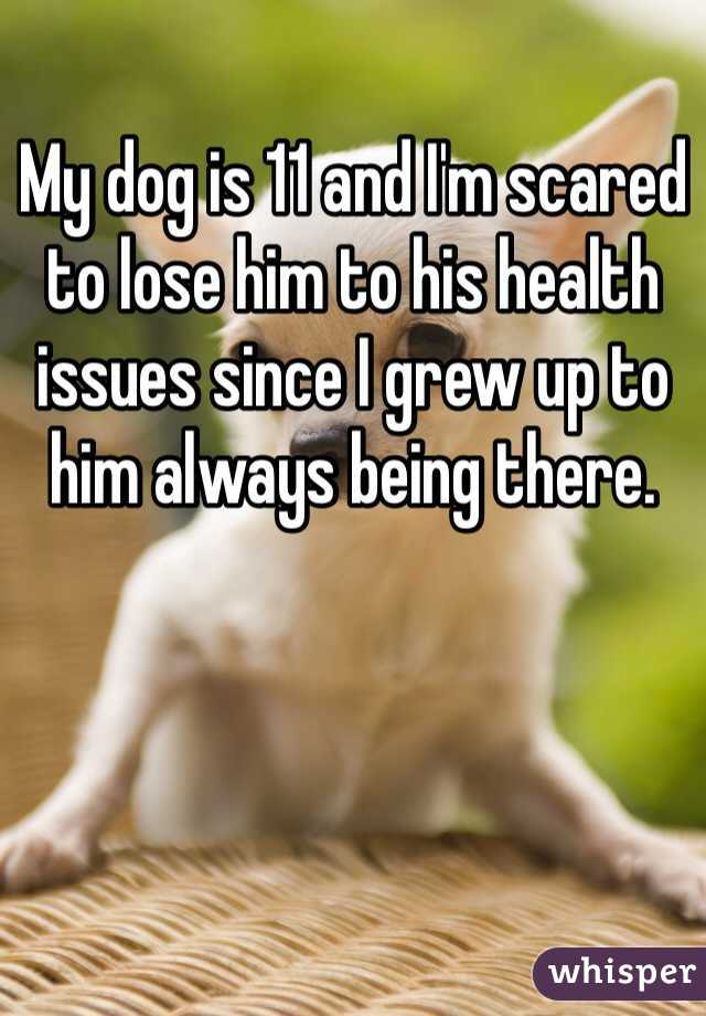 My dog is 11 and I'm scared to lose him to his health issues since I grew up to him always being there.