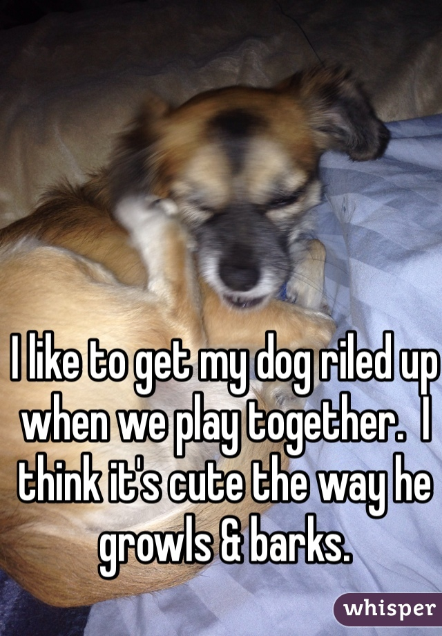 I like to get my dog riled up when we play together.  I think it's cute the way he growls & barks.