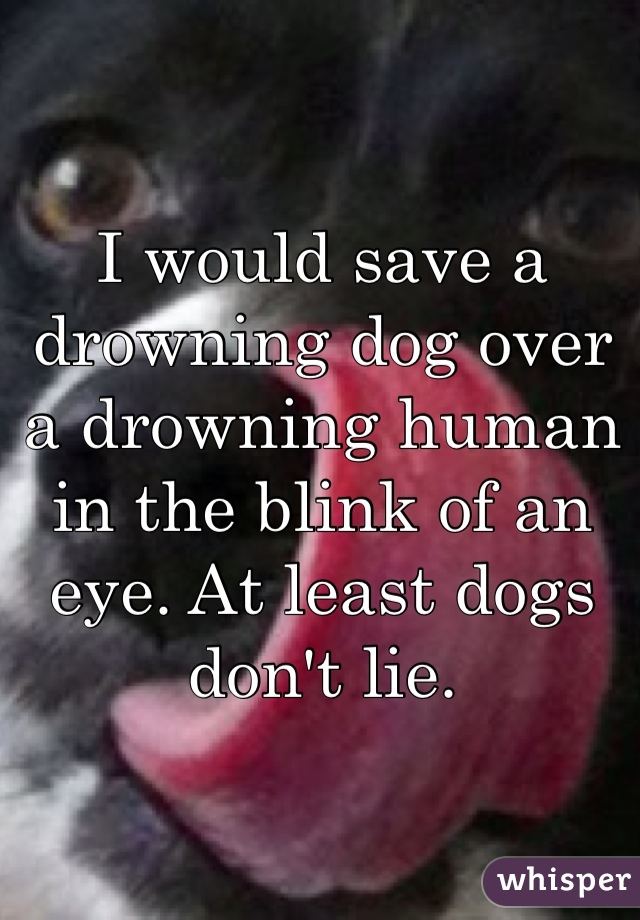 I would save a drowning dog over a drowning human in the blink of an eye. At least dogs don't lie.