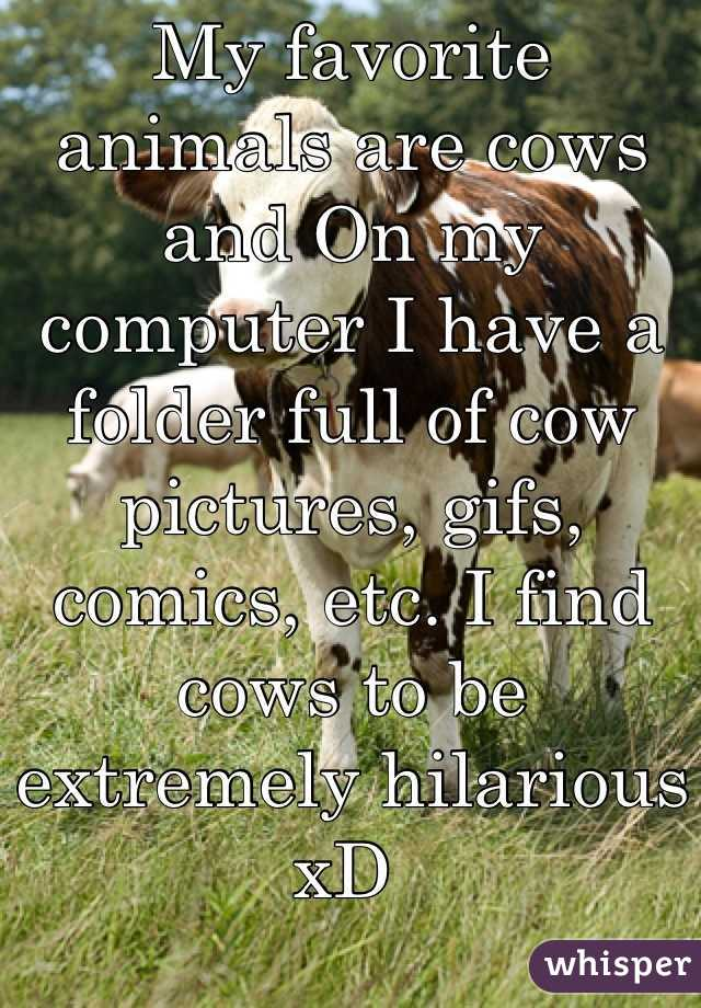 My favorite animals are cows and On my computer I have a folder full of cow pictures, gifs, comics, etc. I find cows to be extremely hilarious xD