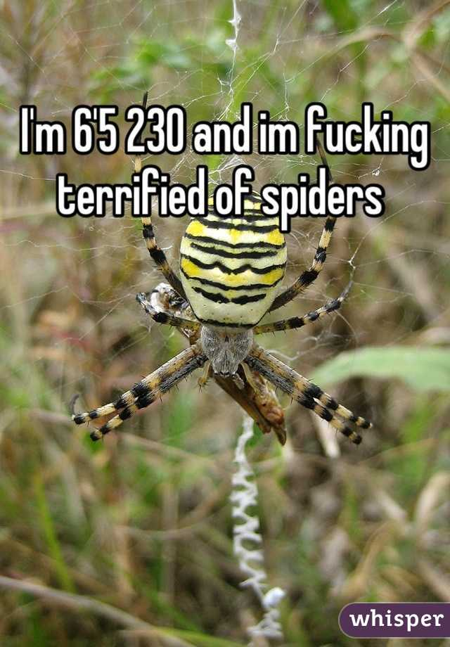 I'm 6'5 230 and im fucking terrified of spiders