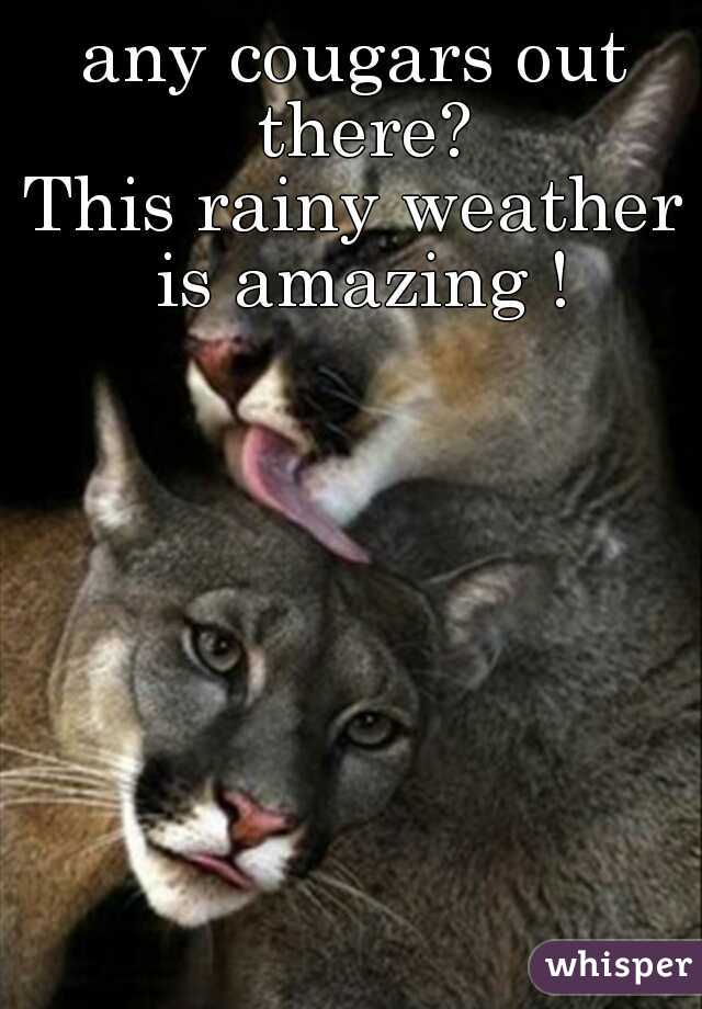 any cougars out there? This rainy weather is amazing !