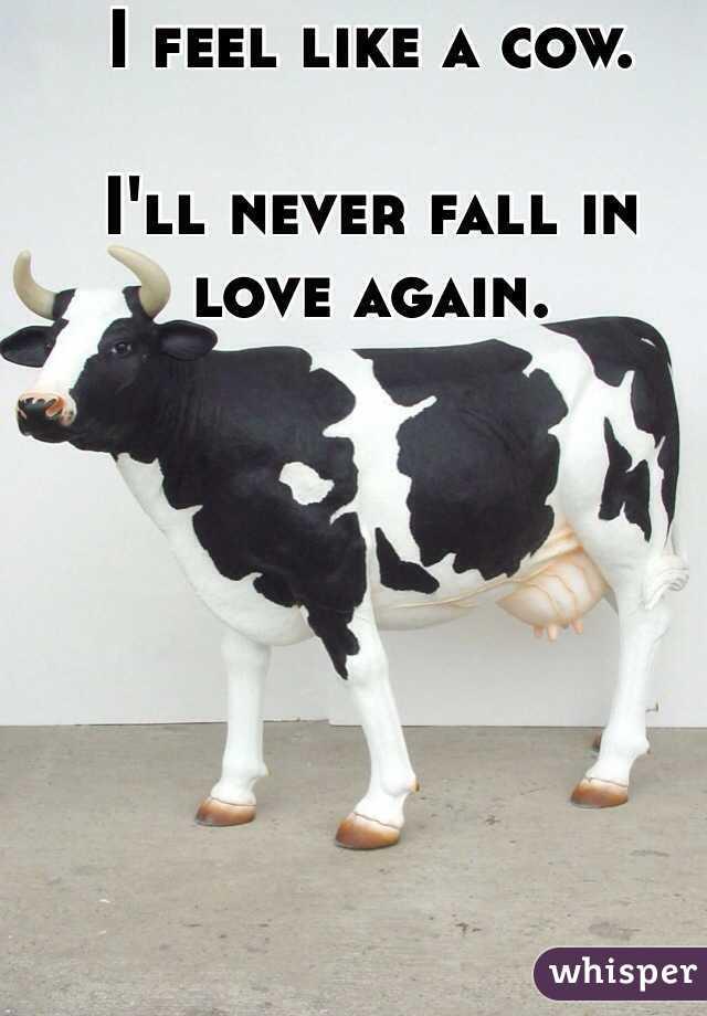 I feel like a cow.   I'll never fall in love again.
