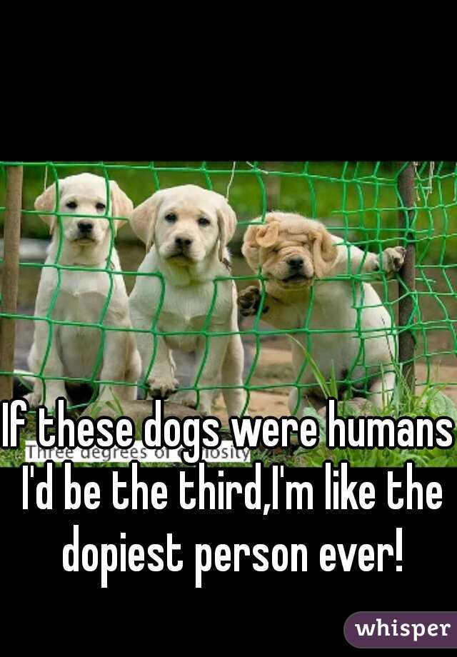If these dogs were humans I'd be the third,I'm like the dopiest person ever!
