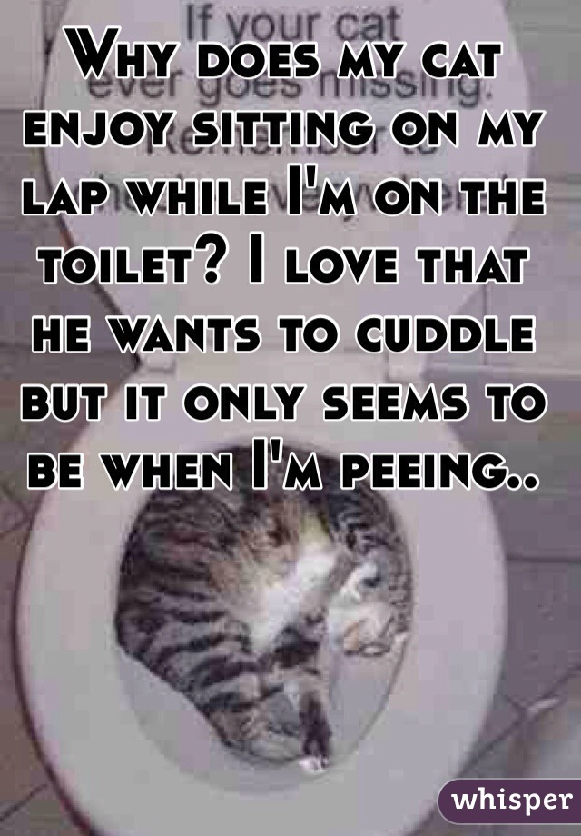 Why does my cat enjoy sitting on my lap while I'm on the toilet? I love that he wants to cuddle but it only seems to be when I'm peeing..
