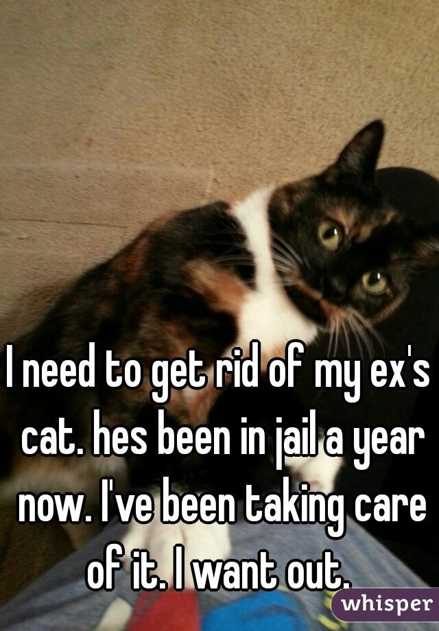 I need to get rid of my ex's cat. hes been in jail a year now. I've been taking care of it. I want out.