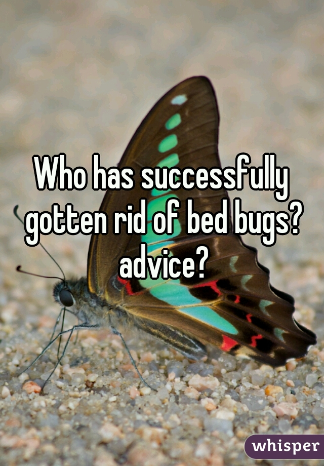 Who has successfully gotten rid of bed bugs? advice?