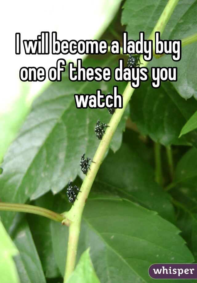 I will become a lady bug one of these days you watch
