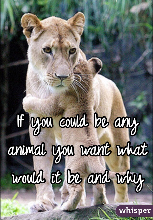 If you could be any animal you want what would it be and why