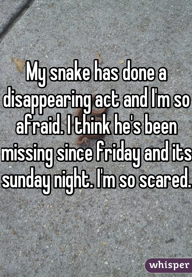 My snake has done a disappearing act and I'm so afraid. I think he's been missing since friday and its sunday night. I'm so scared.