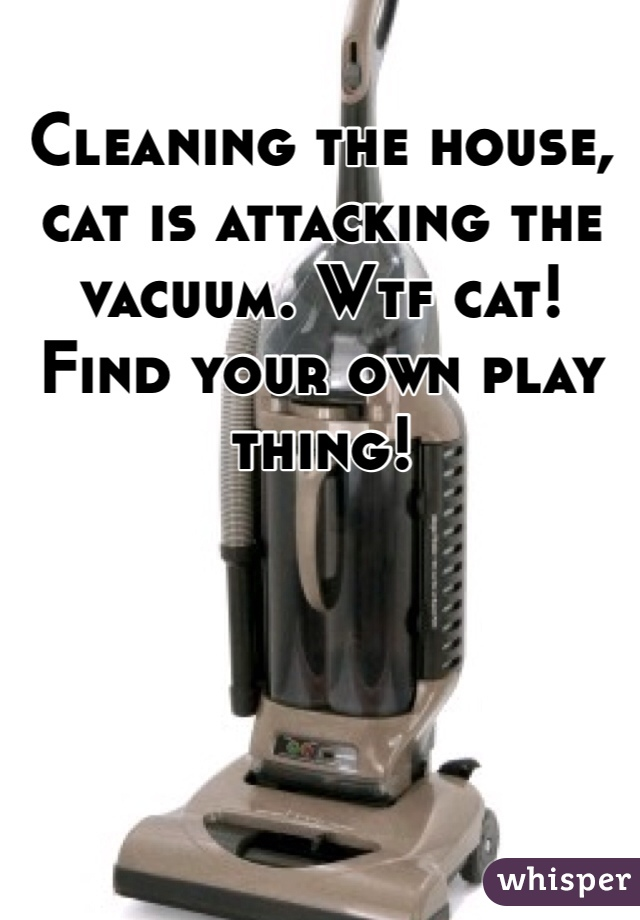 Cleaning the house, cat is attacking the vacuum. Wtf cat! Find your own play thing!