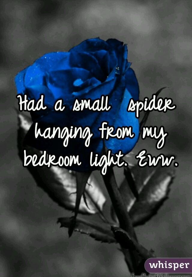 Had a small  spider hanging from my bedroom light. Eww.