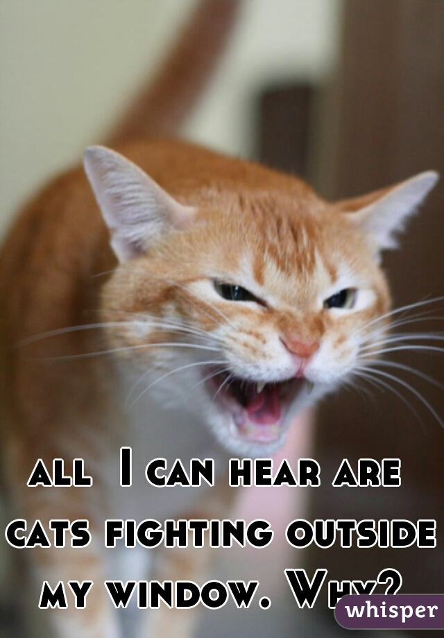 all  I can hear are cats fighting outside my window. Why?