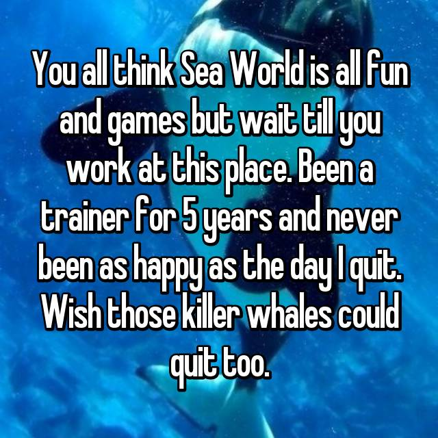You all think Sea World is all fun and games but wait till you work at this place. Been a trainer for 5 years and never been as happy as the day I quit. Wish those killer whales could quit too.