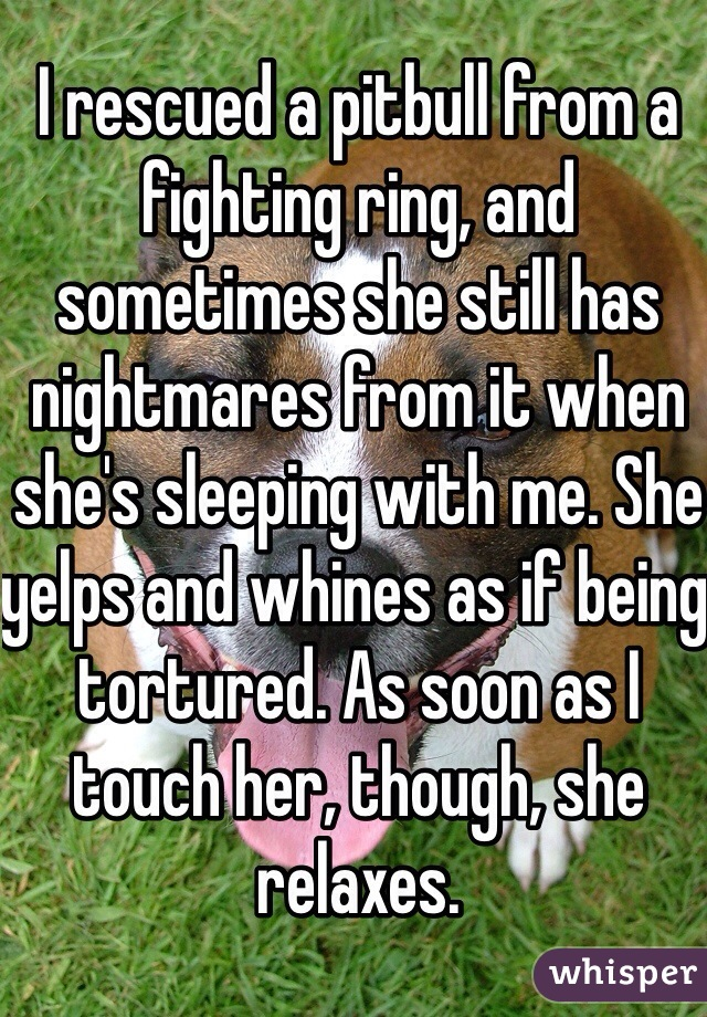 I rescued a pitbull from a fighting ring, and sometimes she still has nightmares from it when she's sleeping with me. She yelps and whines as if being tortured. As soon as I touch her, though, she relaxes.