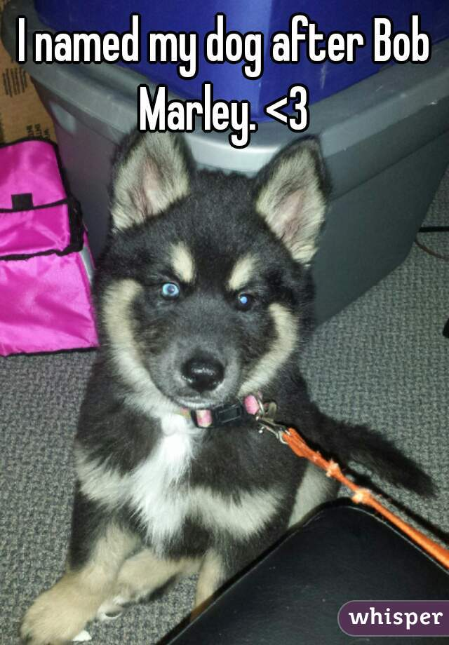 I named my dog after Bob Marley. <3