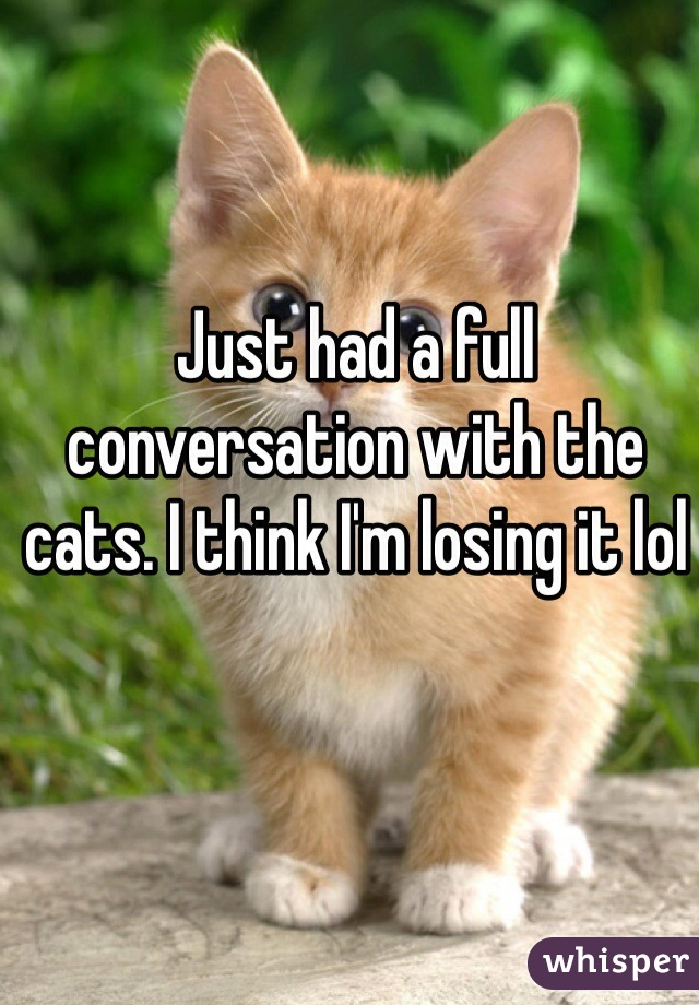 Just had a full conversation with the cats. I think I'm losing it lol