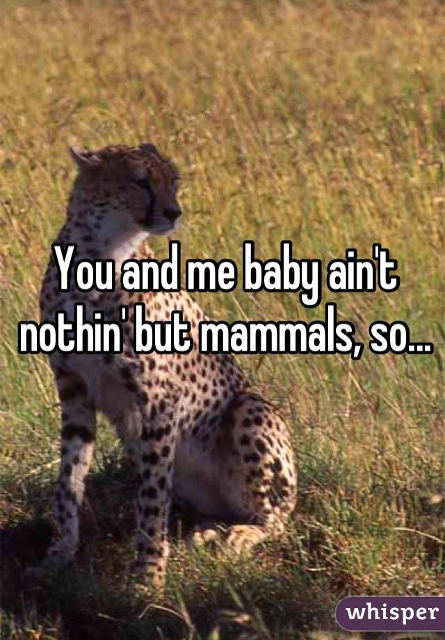 You and me baby ain't nothin' but mammals, so...