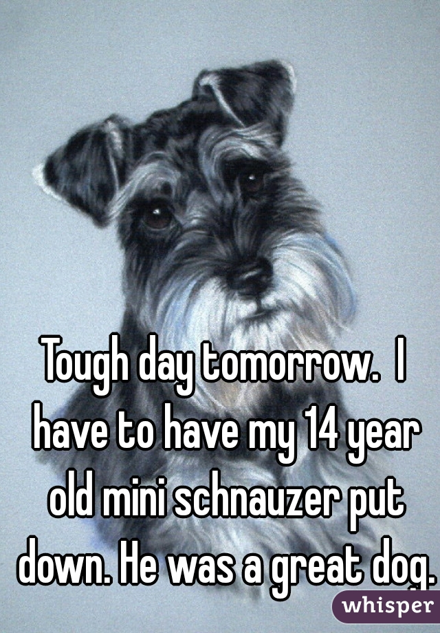 Tough day tomorrow.  I have to have my 14 year old mini schnauzer put down. He was a great dog.