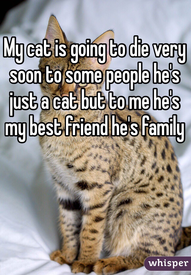 My cat is going to die very soon to some people he's just a cat but to me he's my best friend he's family