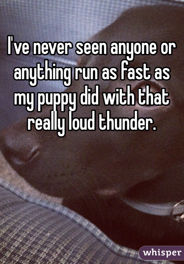 I've never seen anyone or anything run as fast as my puppy did with that really loud thunder.