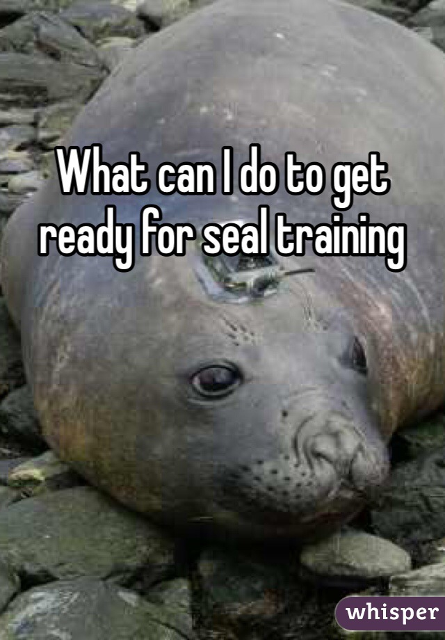 What can I do to get ready for seal training