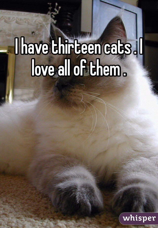I have thirteen cats . I love all of them .
