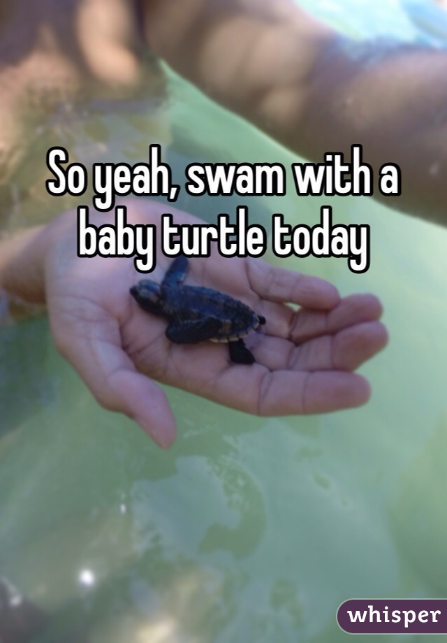 So yeah, swam with a baby turtle today