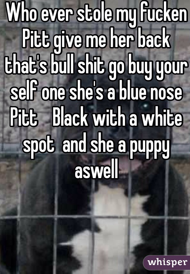 Who ever stole my fucken Pitt give me her back that's bull shit go buy your self one she's a blue nose Pitt    Black with a white spot  and she a puppy aswell