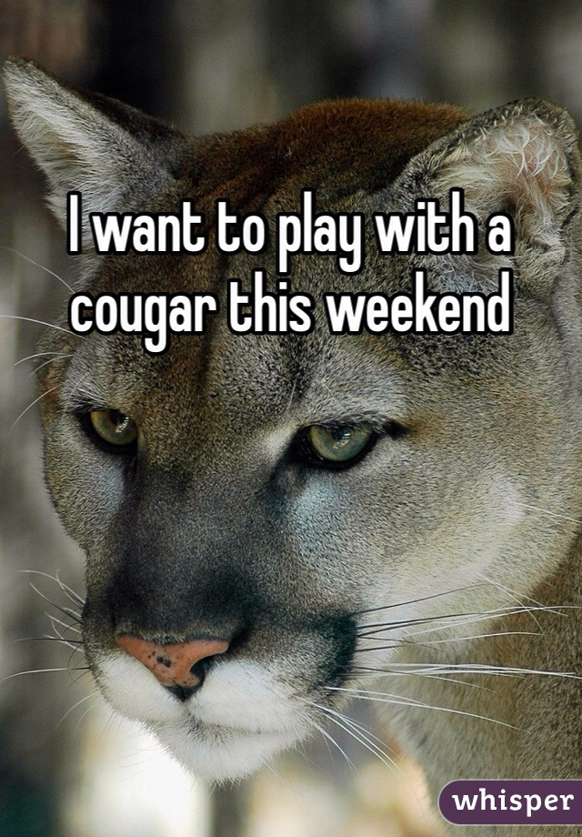I want to play with a cougar this weekend