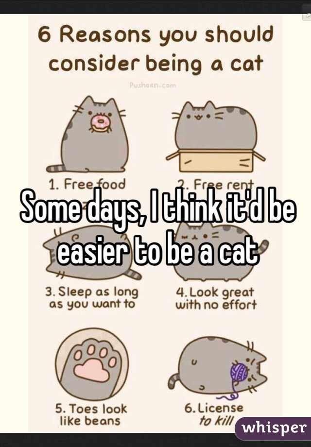 Some days, I think it'd be easier to be a cat