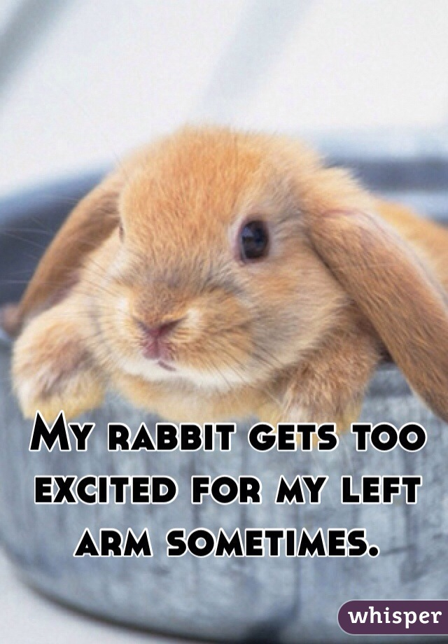My rabbit gets too excited for my left arm sometimes.