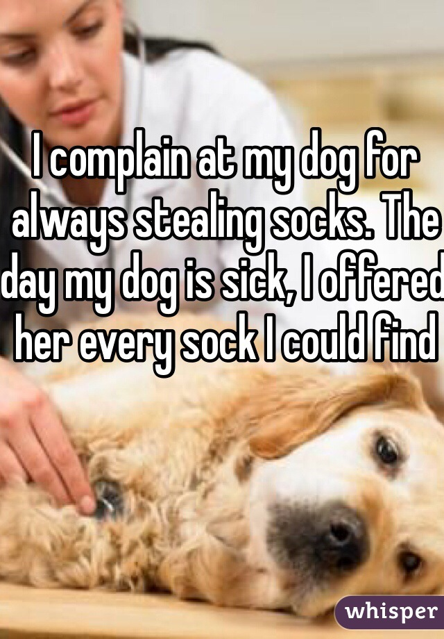 I complain at my dog for always stealing socks. The day my dog is sick, I offered her every sock I could find