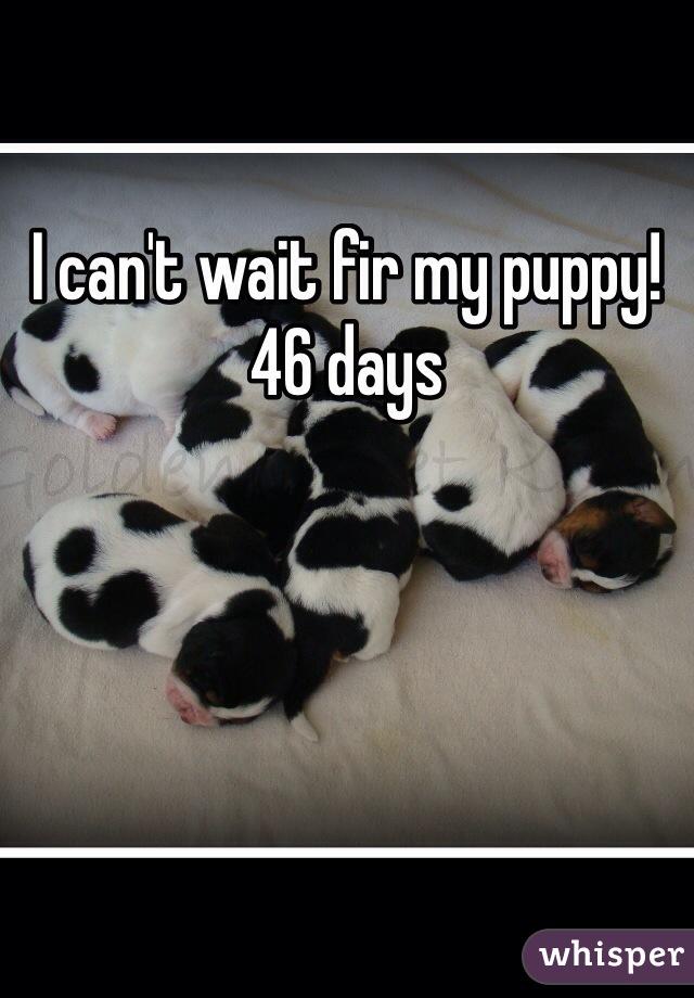 I can't wait fir my puppy! 46 days