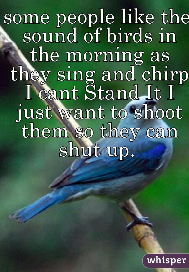 some people like the sound of birds in the morning as they sing and chirp I cant Stand It I just want to shoot them so they can shut up.