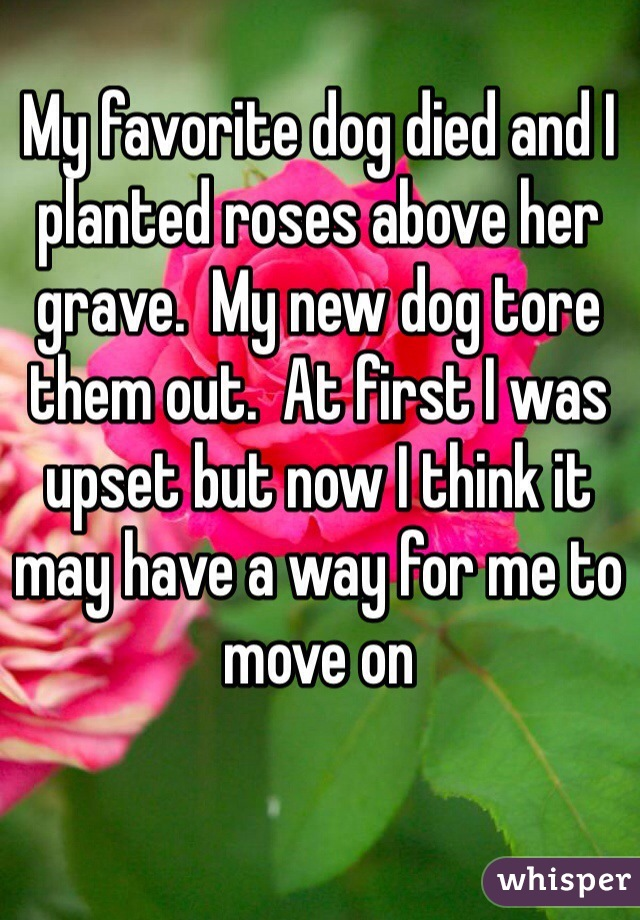 My favorite dog died and I planted roses above her grave.  My new dog tore them out.  At first I was upset but now I think it may have a way for me to move on