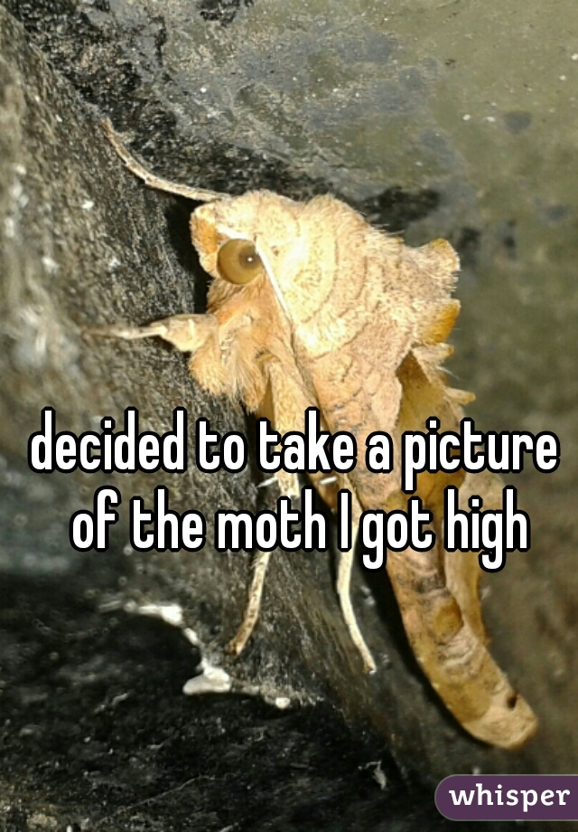 decided to take a picture of the moth I got high