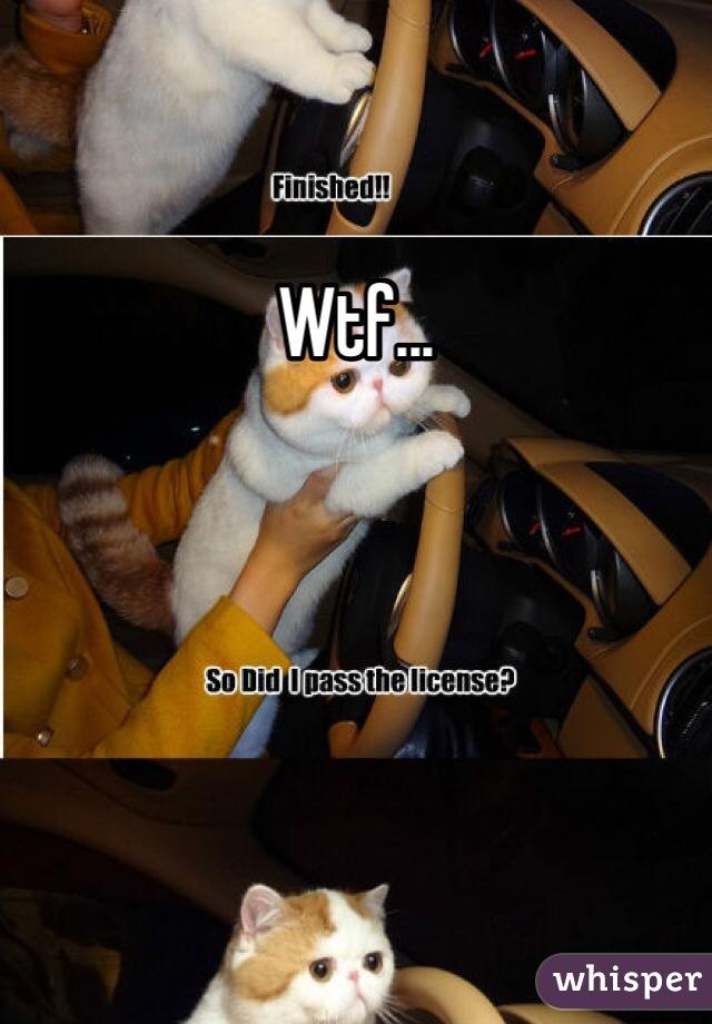 Wtf...