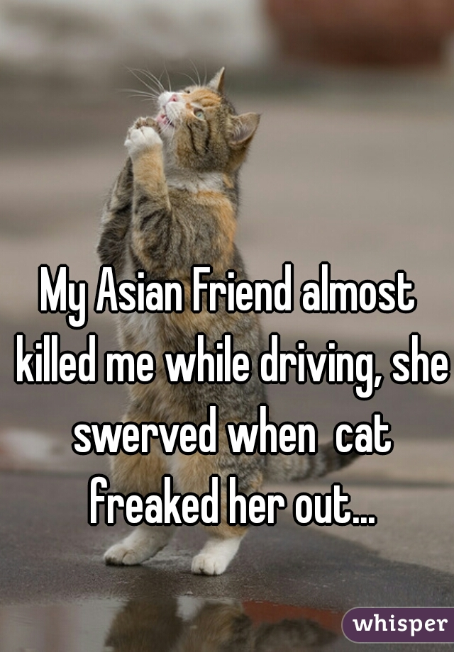 My Asian Friend almost killed me while driving, she swerved when  cat freaked her out...