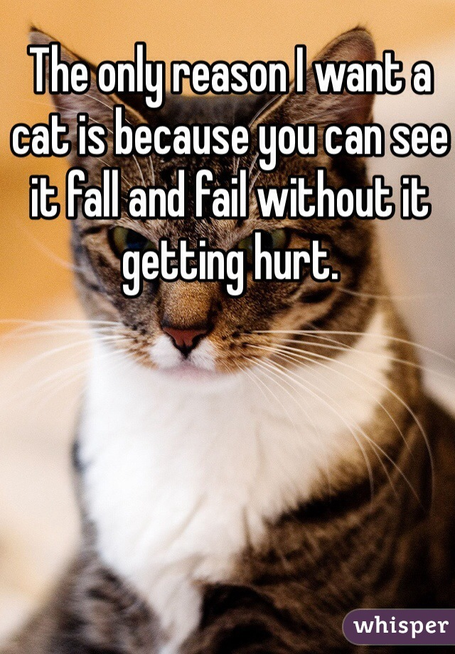 The only reason I want a cat is because you can see it fall and fail without it getting hurt.