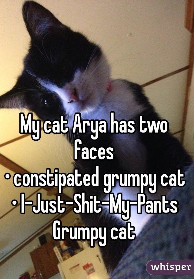 My cat Arya has two faces  • constipated grumpy cat • I-Just-Shit-My-Pants Grumpy cat