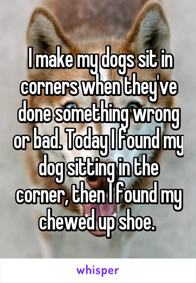 I make my dogs sit in corners when they've done something wrong or bad. Today I found my dog sitting in the corner, then I found my chewed up shoe.