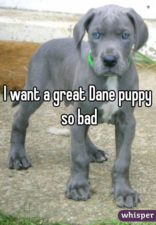 I want a great Dane puppy so bad