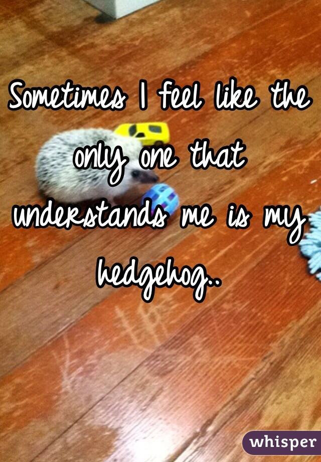 Sometimes I feel like the only one that understands me is my hedgehog..