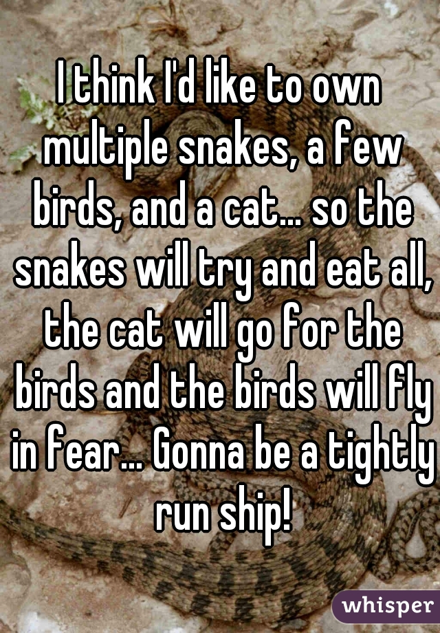 I think I'd like to own multiple snakes, a few birds, and a cat… so the snakes will try and eat all, the cat will go for the birds and the birds will fly in fear… Gonna be a tightly run ship!