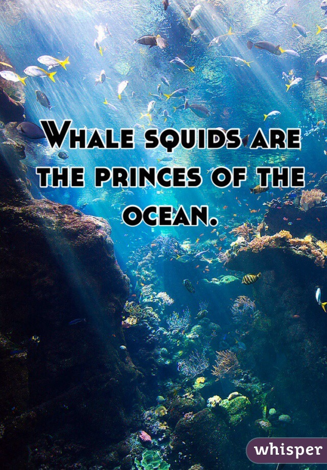 Whale squids are the princes of the ocean.