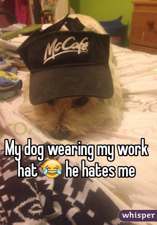My dog wearing my work hat 😂 he hates me