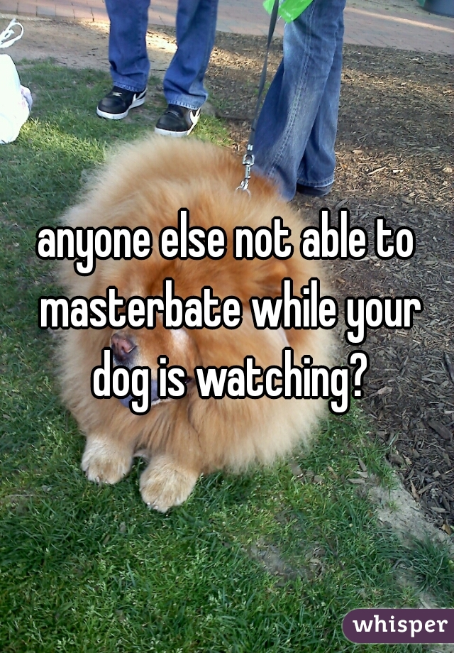 anyone else not able to masterbate while your dog is watching?
