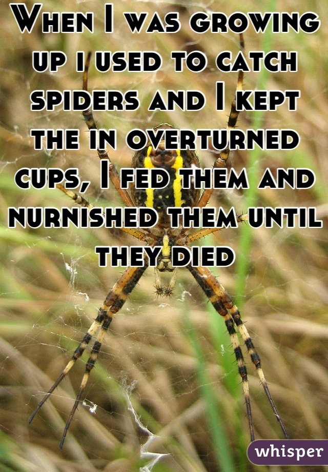 When I was growing up i used to catch spiders and I kept the in overturned cups, I fed them and nurnished them until they died