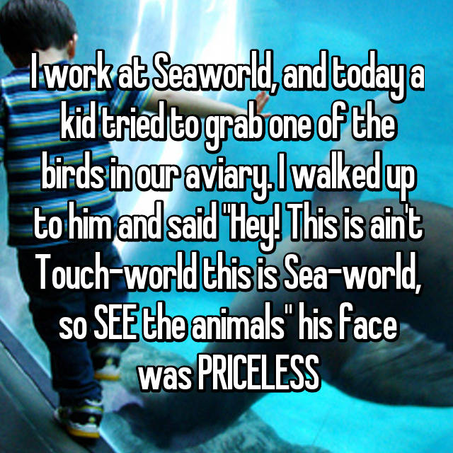 """I work at Seaworld, and today a kid tried to grab one of the birds in our aviary. I walked up to him and said """"Hey! This is ain't Touch-world this is Sea-world, so SEE the animals"""" his face was PRICELESS"""